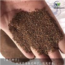 目前秦艽種子價格行情