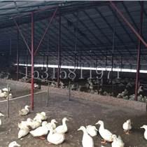 鸭棚养殖大棚 新型保温大棚 牛羊棚