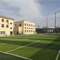 足球場運動草坪價格--人造草坪工藝--河北華飛體育建
