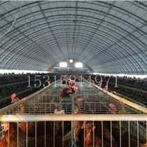 溫室大棚廠家 畜牧養殖大棚建造安裝