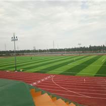 供应橄榄球场草坪材料-人造草坪价格-河北华飞建工