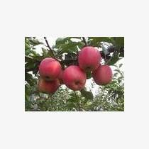 采水源蘋果 感動好生活