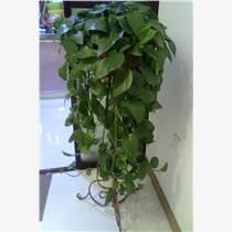 天津花卉銷售租擺租賃公司
