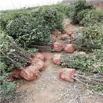 銅川市耀州區林苑林業綠化苗木基地