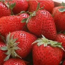 美国进口草莓浓缩汁厂家供应