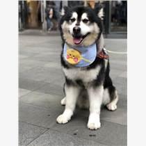 带着宠物狗一起去留学入境手续办理支招上海佰越航服