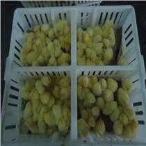 塑料雞苗筐 雞苗運輸筐 小雞運輸筐
