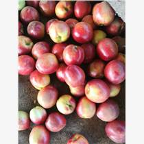 大棚油桃哪里的多,中有四號批發價格是多少