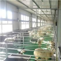 生產塑料羊糞板廠家抗摔抗曬羊床塑料羊鋪板價格
