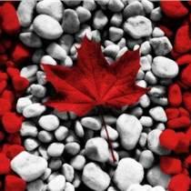 加拿大技術移民就找洲巡出國