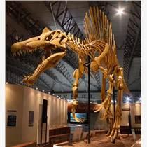 仿真恐龍骨架模型 恐龍化石模型制作