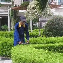 廠區綠化養護中不同植物的養護要點
