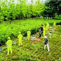 中山绿化养护怡轩园林中山清远小区绿化养护服务
