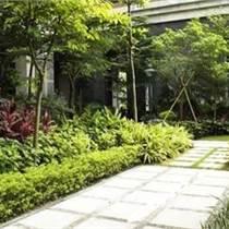 中山绿化养护怡轩园林厂区园区花园绿化养护服务