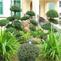 綠化養護苗木的補種工作