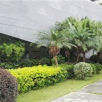 中山綠化養護服務草坪養護 怡軒園林綠化養護