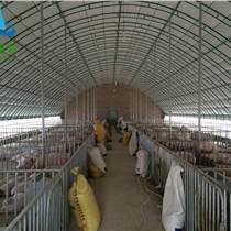 養豬大棚 豬棚 豬舍搭建 寧津縣世瑞畜牧大棚廠