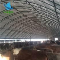 養牛大棚施工 養牛棚介紹 牛棚搭建