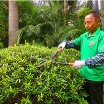 道路綠化養護冬季綠化苗木病蟲害防治工作計劃