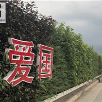 綠植圍擋助力綠色生態城市建設
