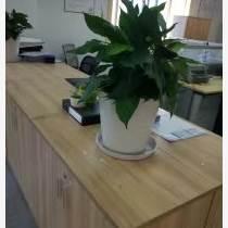 蘇州出租植物 蘇州出租綠植 蘇州出租花卉  蘇州出租