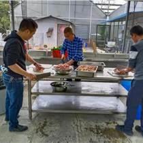 深圳農家樂團建野炊燒烤休閑一日游活動好去處