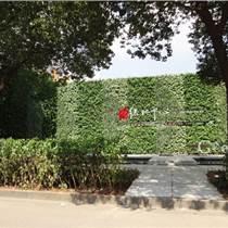 新乡许昌室内外植物墙施工