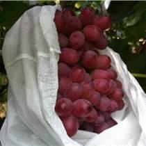 天緯無紡布袋 水果袋 香蕉袋 葡萄袋 火龍果袋 果品