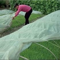 防寒布 保溫膜 防寒膜 防寒無紡布 天緯農用無紡布