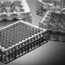 上海百千定制多聚賴氨酸包被細胞培養板 PLL預處理涂