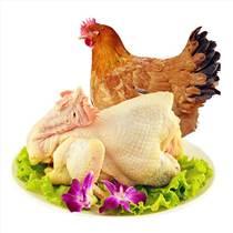 廣東120天閹雞