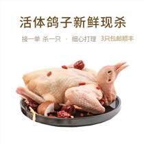 廣東乳鴿批發