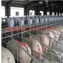 養豬設備母豬定位欄 限位欄