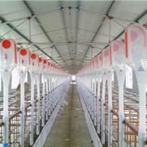 養豬設備 自動化喂料線喂料塔