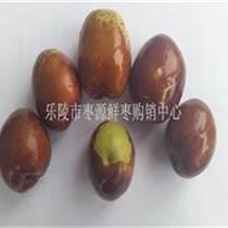 山東鮮元紅棗批發銷售旺季