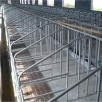 三元畜牧養豬設備限位欄