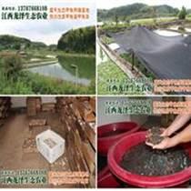 全国生态甲鱼苗孵化基地