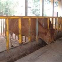 西門塔爾肉牛多少錢