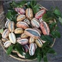 供八月瓜種子300公斤