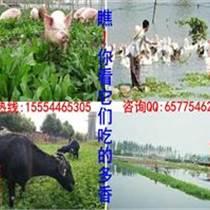 牧草品种与畜牧草种子