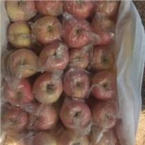 70以上陜西膜袋紅富士蘋果價格