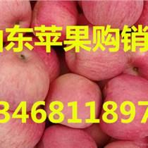 河南紅富士蘋果價格