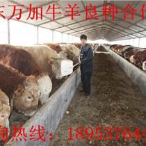 養肉牛成本