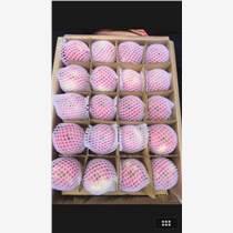 陜西粉紅女士蘋果65以上價格