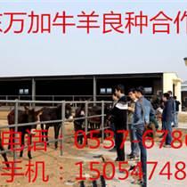 肉牛價格行情