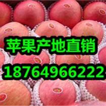 今日紅富士蘋果價格山東紅富士蘋果價格