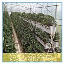 英耐爾大棚基質草莓種植槽
