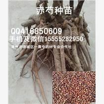 知母种子/知母籽/知母苗批发价格