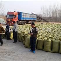 金丝小枣饲料枣产地大量批发