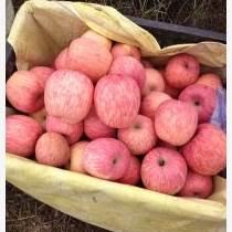 陜西紅富士蘋果,紅富士蘋果價格,冷庫紅富士蘋果。